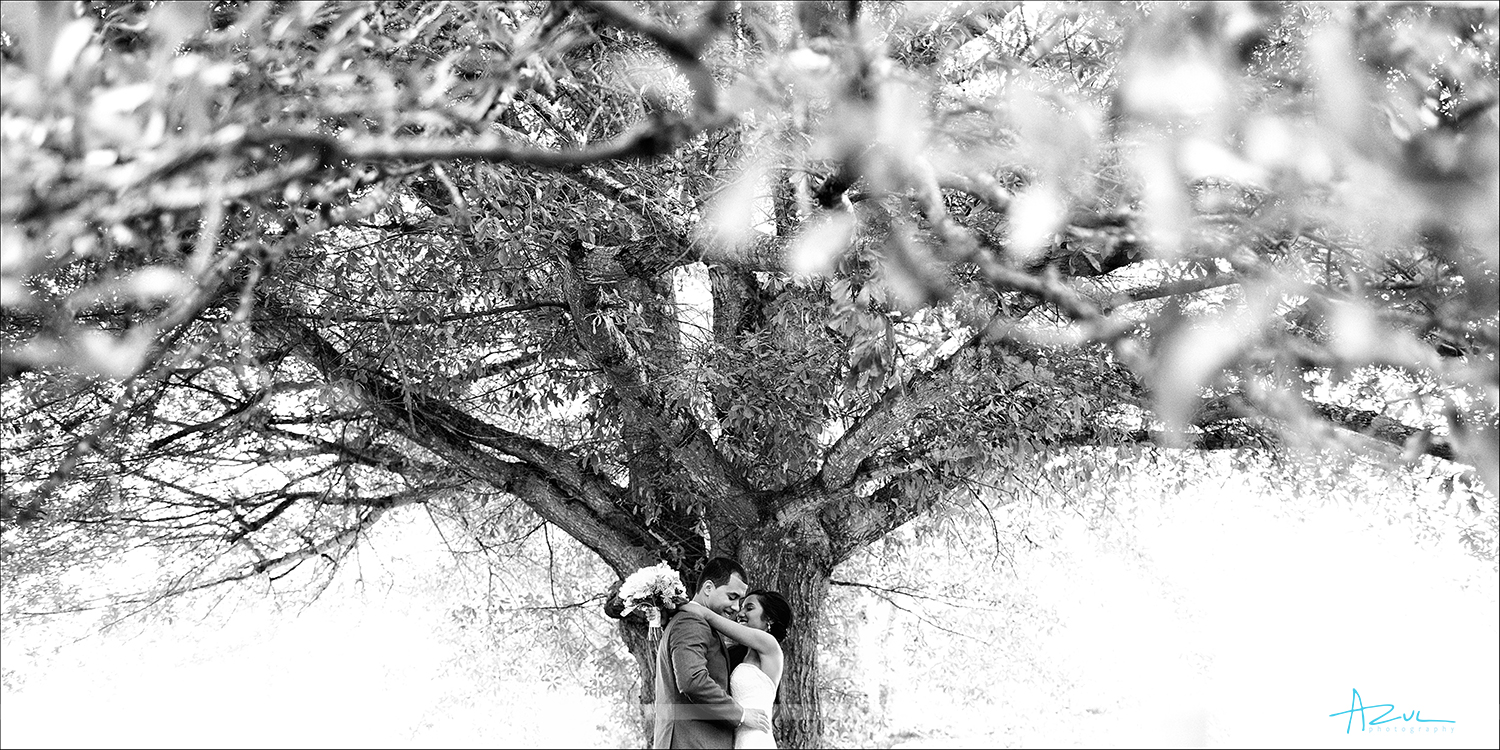 Photographer captures the love of the Bride and Groom under a tree on their wedding day in Raleigh NC